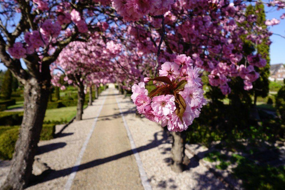 Blomster Aalborg