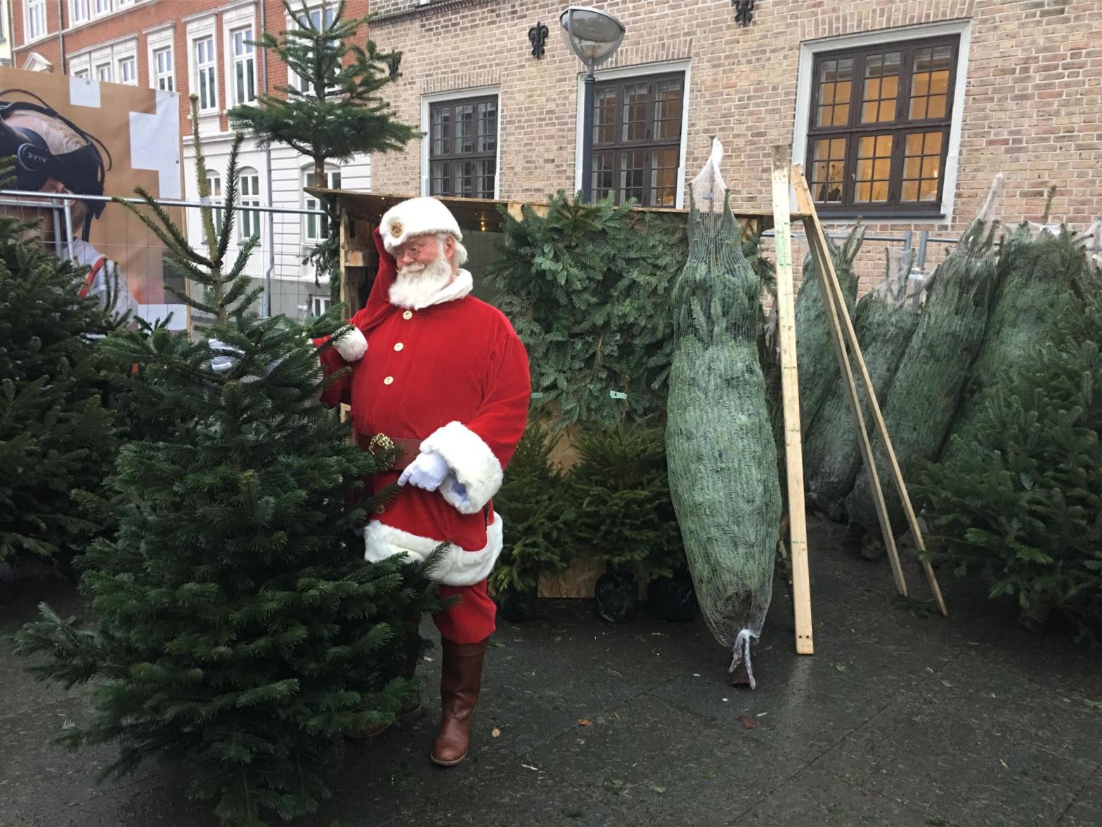 Utraditionelt studiejob: Sælger juletræer midt inde i Aalborg