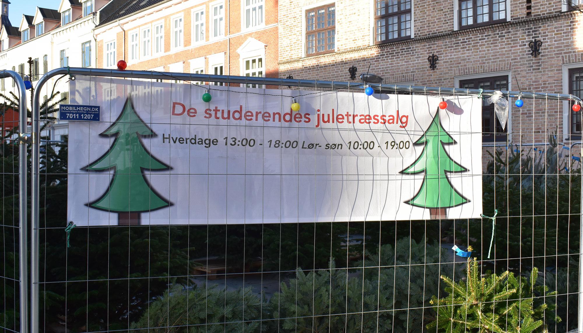 For tredje år i træk: Studiekammerater sælger juletræer midt i Aalborg
