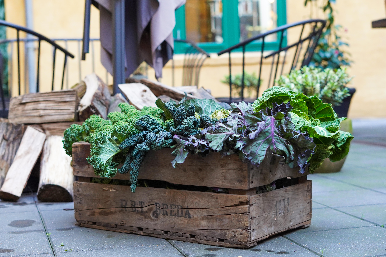 Tabu udvider: Stjerne-kok åbner Aalborgs første vegetar-restaurant
