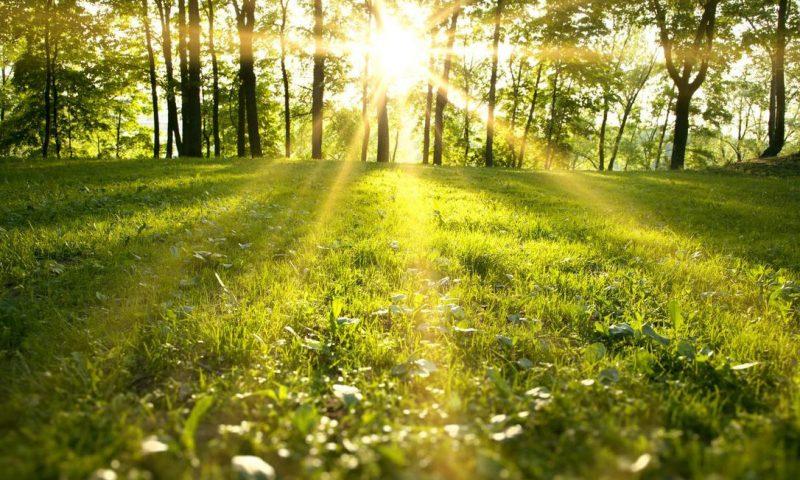 7fe37d0fb961 Foråret kom tidligt  Vejret ramte 29 år gammel varmerekord