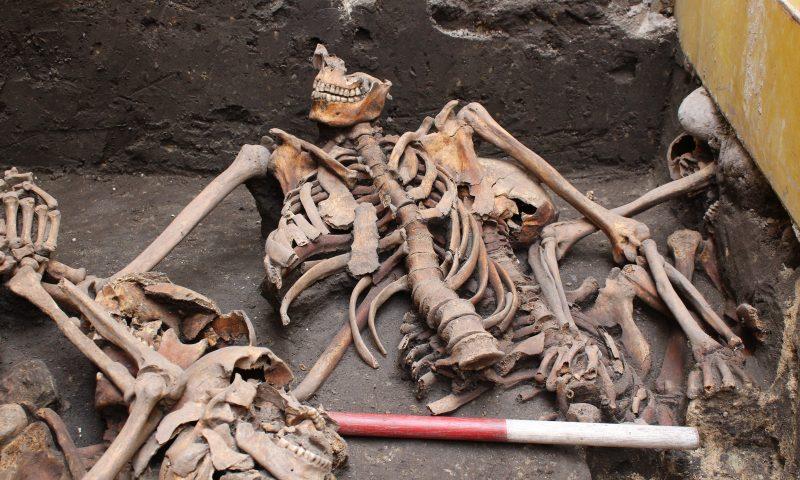 Ofrene i massegraven er helt tydeligt lagt i graven i al hast, og vi kan stadig i dag se, hvordan man har haft fat under armene, da de er blevet lagt i graven. (Foto: Nordjyllands Historiske Museum)
