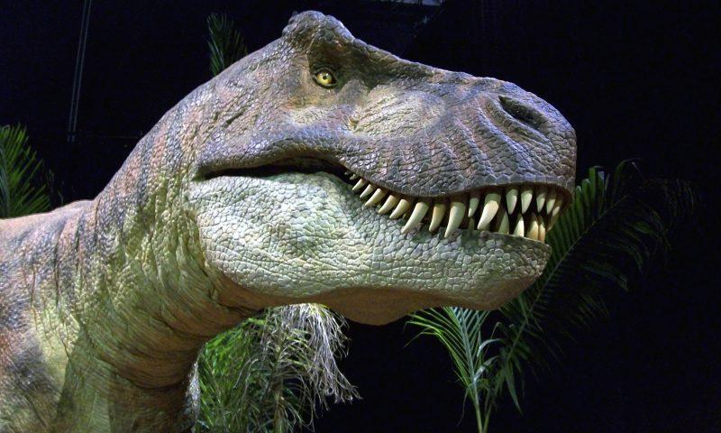 Arkivfoto fra T Rex udstilling