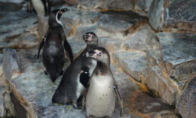 cd3c2e65238 Vilde besøgstal: Gæsterne strømmer til Aalborg Zoo