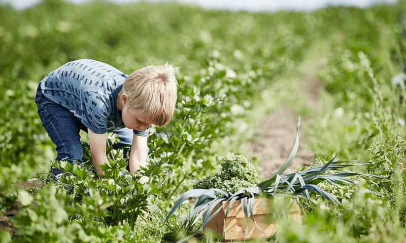 Arkivfoto Økologisk Høstmarked