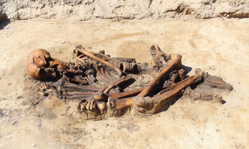 Et af de helt særlige fund, som arkæologerne har gjort, er dette velbevarede skelet. Det er fra en mand, der levede i området ved Sdr. Tranders omkring 400 f.Kr.  Foto: Nordjyllands Historiske Museum