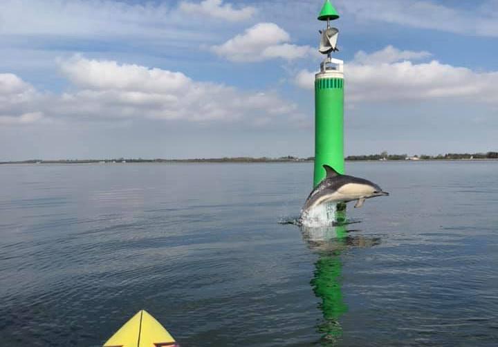 Eksperter er enige: Delfinerne er på vej til Nordjylland