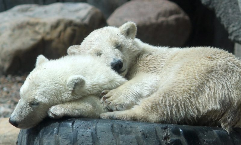 Foto: Aalborg Zoo