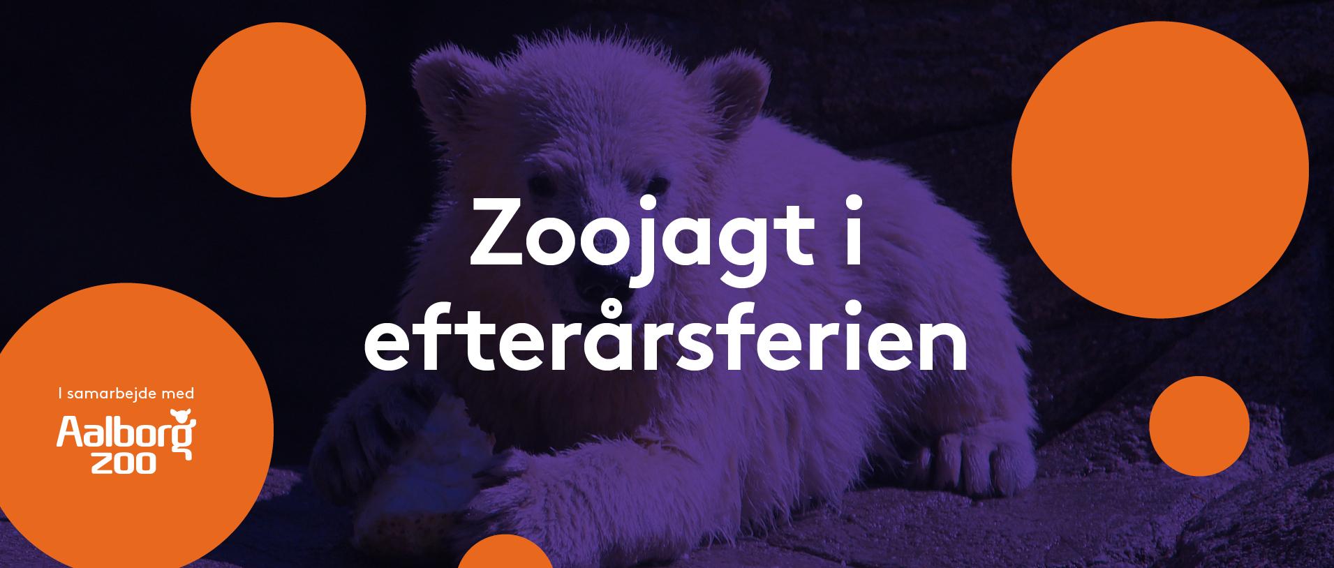 Masser af sjov i Friis i efterårsferien: Find de forsvundne dyr til Zoojagt