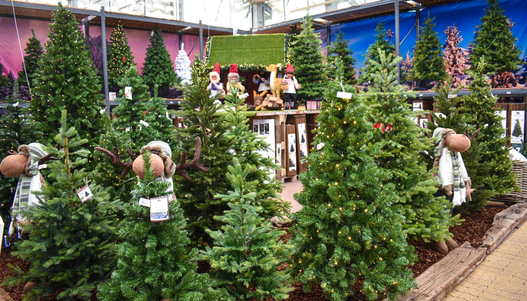 Et julemirakel på 1000 kvm: Plantorama åbner kæmpe juleudstilling