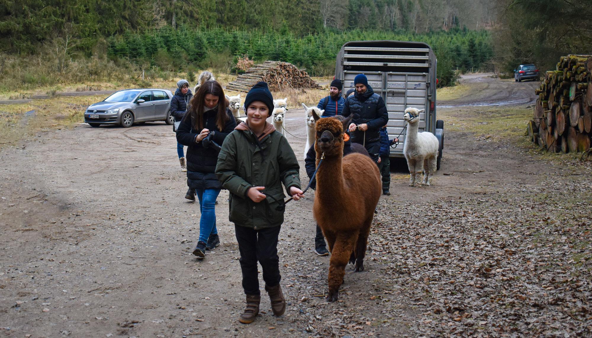 Gå med en Alpaca: Her du får Nordjyllands hyggeligste Walk n' Talk