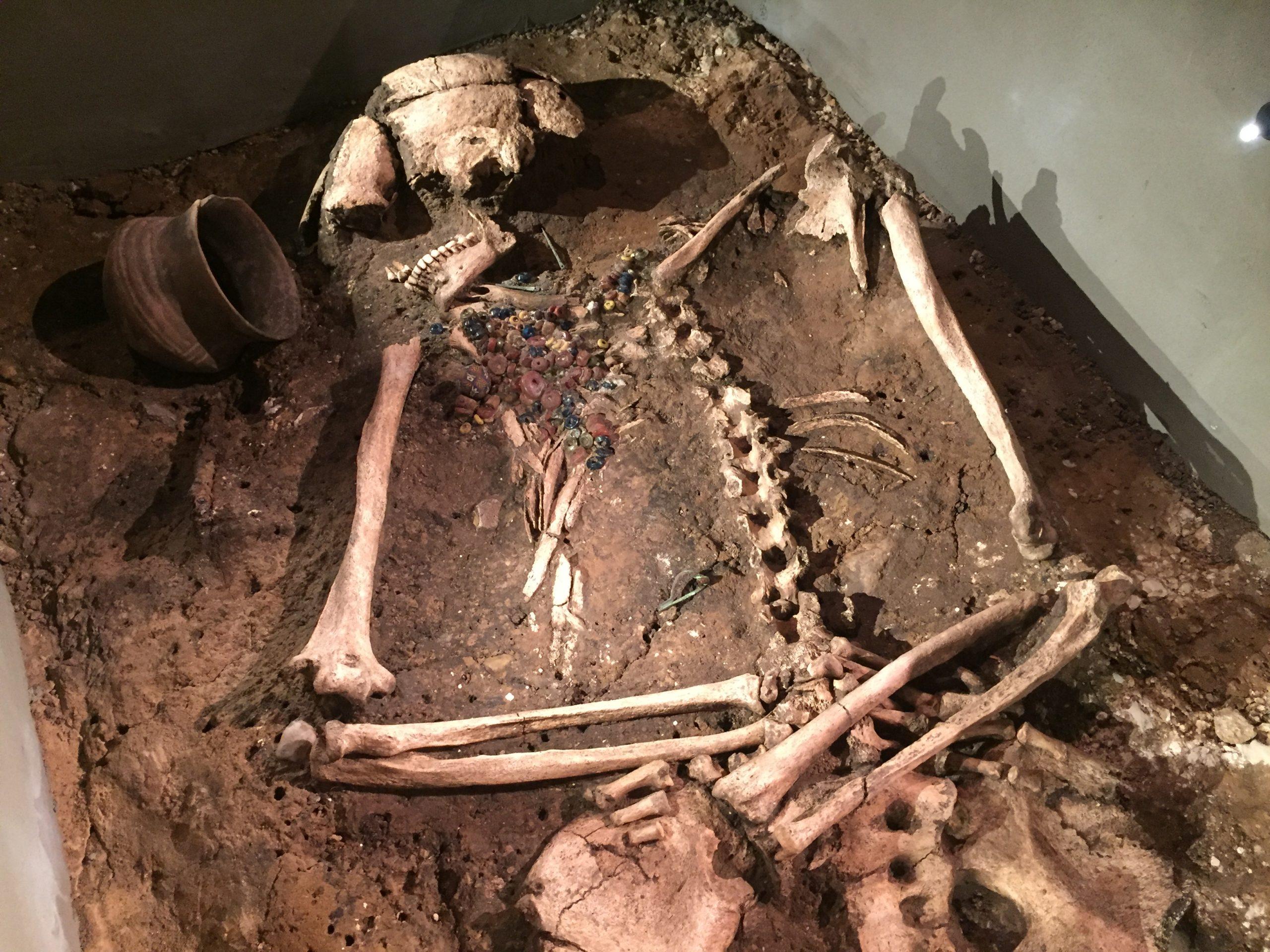 Gemmer på utrolig viden: Skeletter fra Lindholm Høje Museet skal bidrage til international forskning