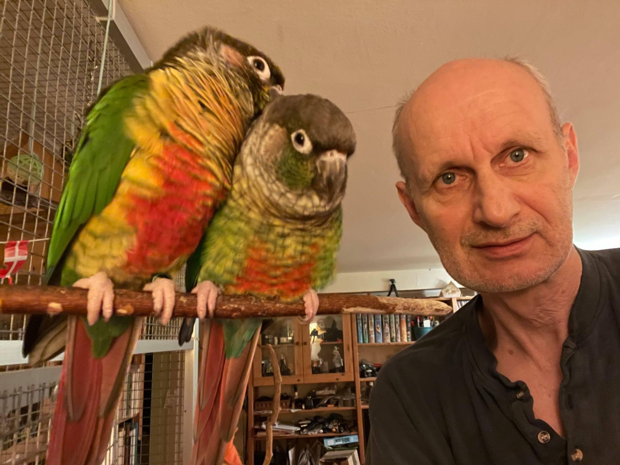Har du set ham?: Papegøjen Teddy er forsvundet fra sit hjem