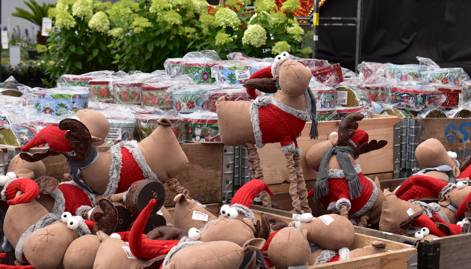 Lidt forsinket: Billigblomst har skudt julesalget i gang